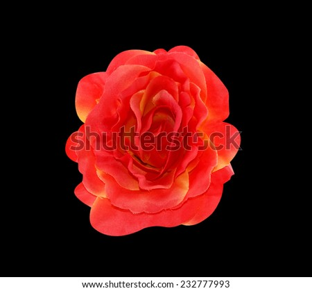 artificial rose on a black background. - stock photo