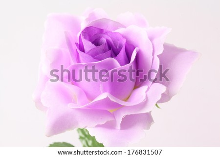 Artificial violet roses on white background - stock photo