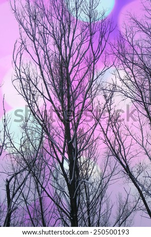 Artistic background with bare trees and colorful bokeh  - stock photo