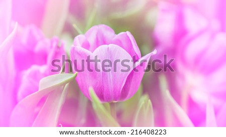 Artistic faded background of colourful spring tulips with a blur effect for a dreamy  - stock photo