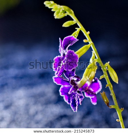 Artistic image of a purple flower with water drops and a blurred bokeh background - stock photo