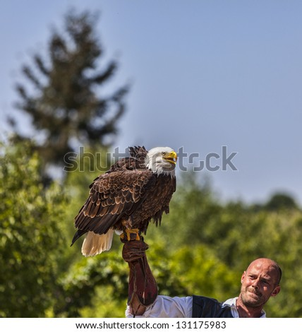 ARVILLE, FRANCE,MAY 23: A male bird tamer with a bald eagle (Haliaeetus leucocephalus) on his hand in a birds tamer show during a historical reenactment festival in Arvile, France on May 23,2010. - stock photo