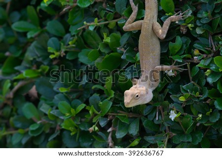 Asia nature chameleon on bush and blurred backgrounds/smart and funny animals - stock photo