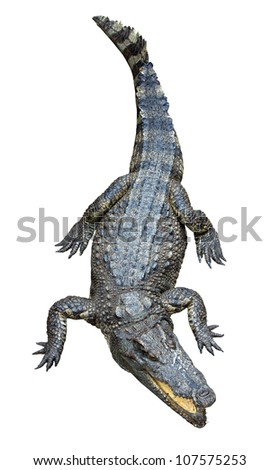 Asian crocodile isolated on white background. - stock photo