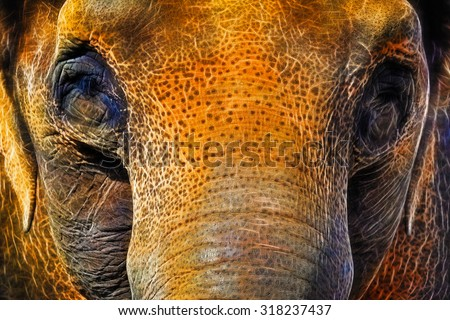 Asian Elephant Closeup Face Portrait Abstract Neon Background - stock photo