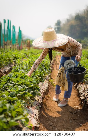 asian girl harvesting strawberry in strawberry farm in thailand - stock photo