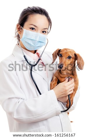 Asian woman veterinarian with dachshund dog - stock photo