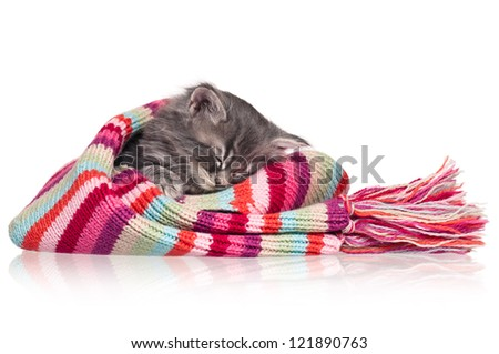 Asleep cute little kitten in a scarf isolated on white background - stock photo