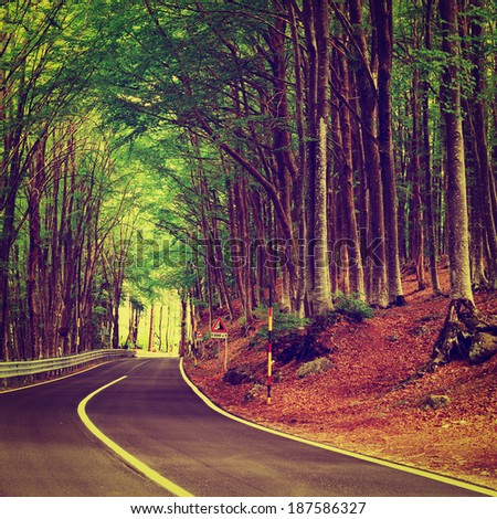 Aspalt Forest Road in Italy, Instagram Effect - stock photo