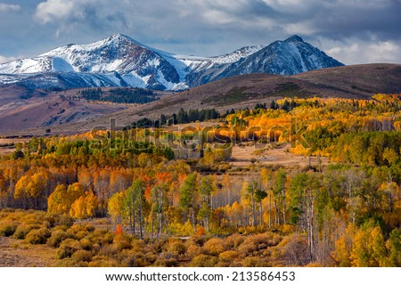 Aspen fall colors on Conway Summit, Eastern Sierra, California. - stock photo