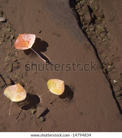 Aspen leaves in stream - stock photo