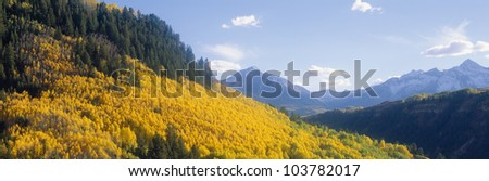 Aspens in Autumn in San Juan National Forest near Telluride, Colorado - stock photo
