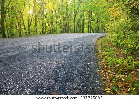 asphalt road in autumn forest. - stock photo