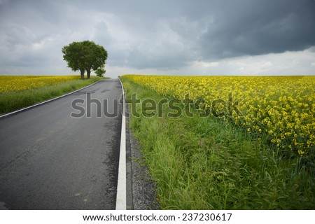 Asphalt road through the the fields with clouds above - stock photo