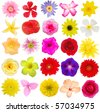 Assorted of colorful blooms - stock photo