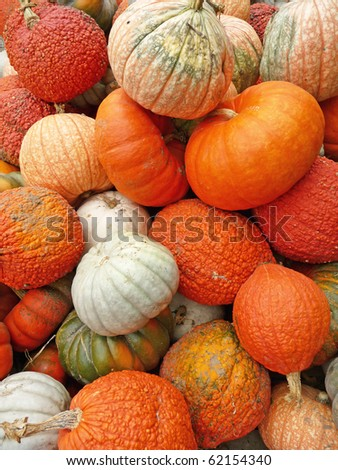 Assorted pumpkin varieties background - stock photo