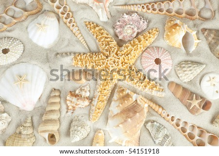 Assorted seashells on a sandy beach filling the frame - stock photo