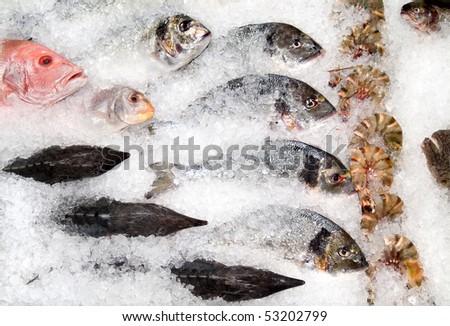 assortment of fish lying on ice - stock photo