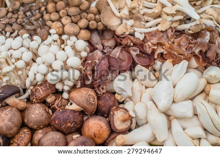 assortment of mushrooms - stock photo