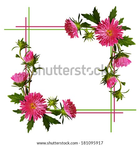 Aster flowers composition and frame on white background - stock photo