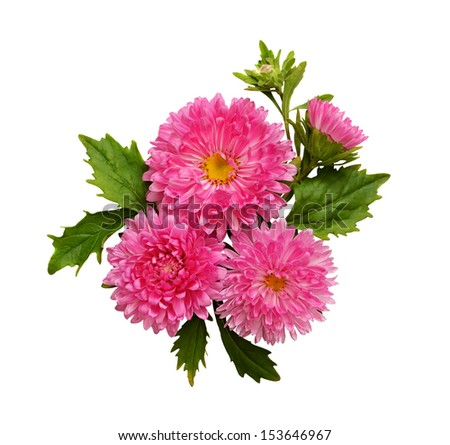 Asters composition isolated on white - stock photo