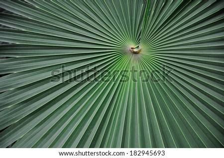 Asymmetric lines converge on the surface of a leaf. - stock photo