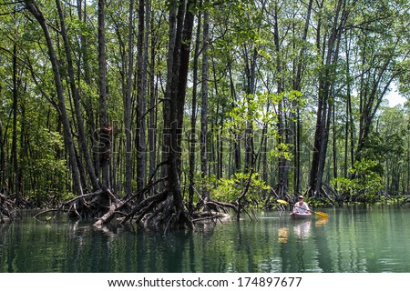 At high tide, a kayaker explores a pristine mangrove forest in the Mergui Archipelago, Myanmar. This set of islands, set in the Andaman Sea not far from Thailand, is rarely visited by foreigners. - stock photo