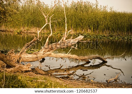 At the river bed in the delta, a dried forgotten tree fallen in the water. Warm tones. - stock photo