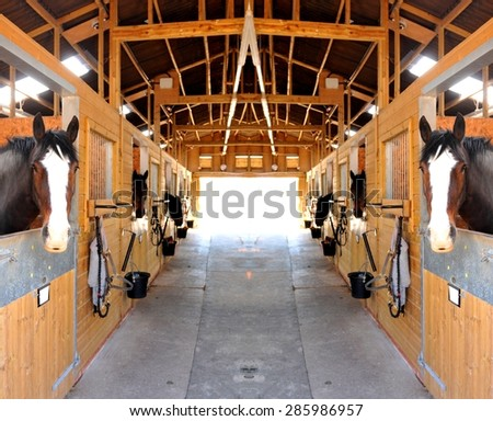 At the stables (selective focus on horses) - stock photo