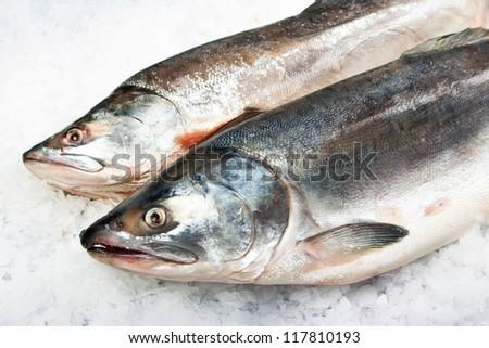 Atlantic Salmon - stock photo