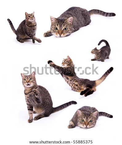 Attacking the different cats on the white isolated background - stock photo