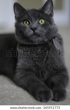Attentive Cat - stock photo