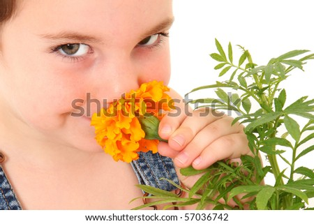 Attractive 3 year old american boy in overalls smelling marigold flower. - stock photo
