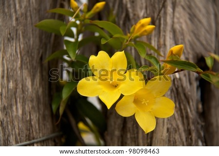 Austin, TX - March 9: SXSW Interactive Conference in Austin. Beautiful flower blooming in Austin during spring time. - stock photo