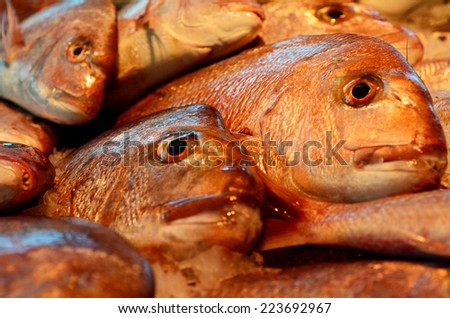 Australasian snapper on display in fishermen market. background texture - stock photo