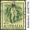 AUSTRALIA-CIRCA 1959: A stamp printed in Australia, shows Wattle (Acacia melanoxylon), circa 1959 - stock photo