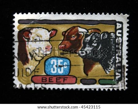 AUSTRALIA - CIRCA 1970s: A stamp printed in Australia shows cows, circa 1970s - stock photo