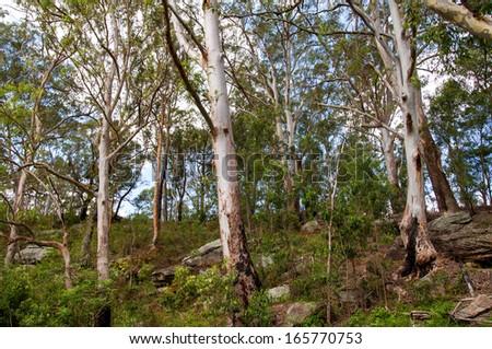 Australian Bush Landscape - stock photo