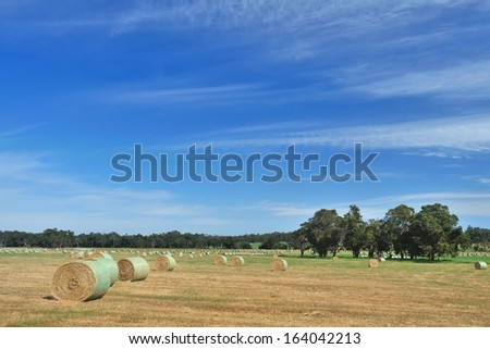 australian farmland with scattered hay rolls - stock photo