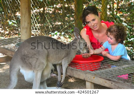 Australian mother and child (girl age 1-2) feed a grey Kangaroo in Queensland Australia. Travel with family concept - stock photo
