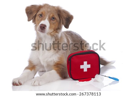 Australian shepherd puppy with first aid kit isolated - stock photo