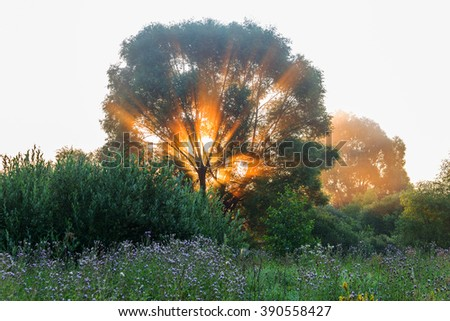 Authentic tree at dawn, filled with gentle rays of the sun in the misty morning haze. Beautiful morning landscape in backlit.