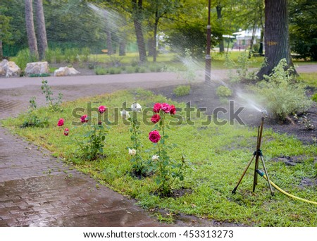 automatic garden lawn sprinkler in watering action of rose bush - stock photo