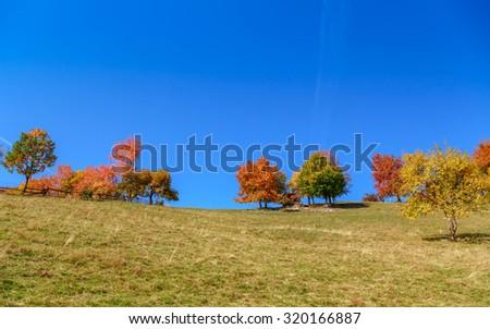 Autum trees and colorful  landscape in the Carpathian mountains. Transylvania,Romania. Europe. - stock photo