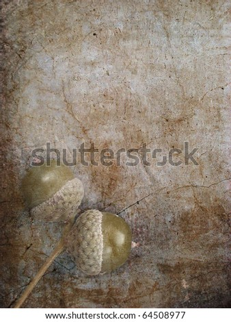 Autumn acorns - stock photo