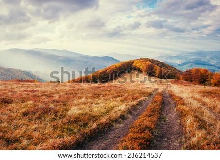 autumn alley  - stock photo