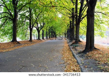 Autumn alley and empty bench in Botanical garden at sunset. Kiev, Ukraine - stock photo