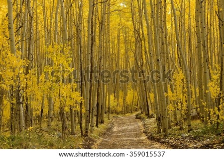 Autumn Aspen Trail - Horizontal - The sun shines on a unpaved hiking trail through a dense aspen forest in golden autumn of Colorado, USA. - stock photo