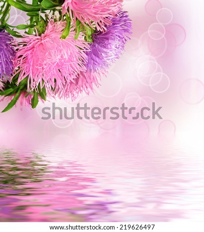 Autumn aster flowers boquet on the colorful bokeh background - stock photo
