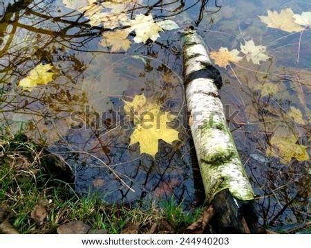 Autumn at a Lake - stock photo